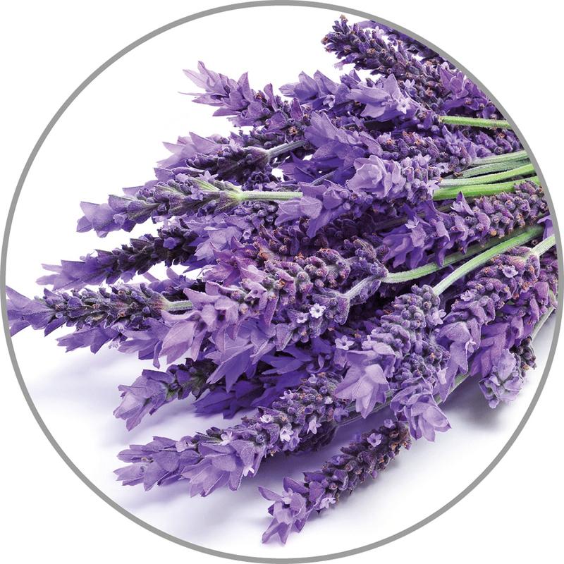 Medisana Vonná esence do aroma difuzérů - levandule