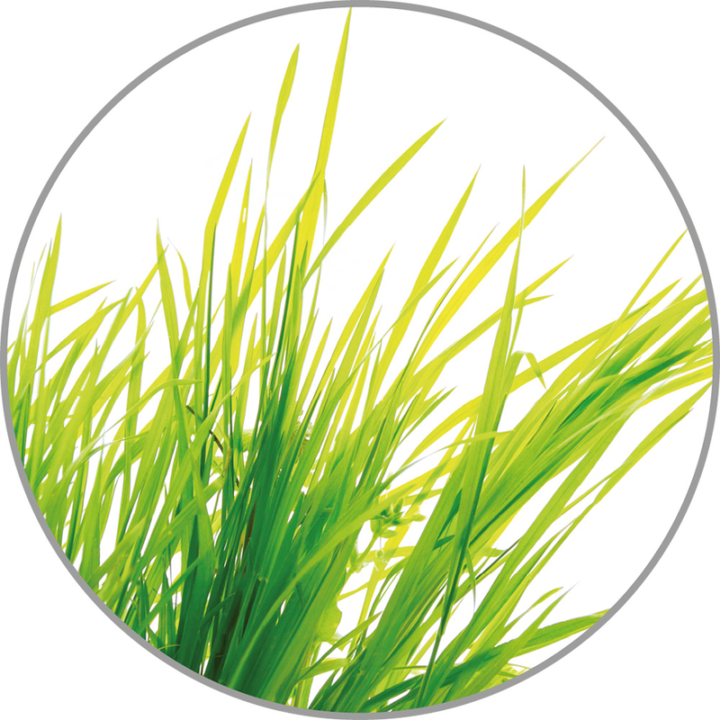 Medisana Vonná esence do aroma difuzérů - citronová tráva