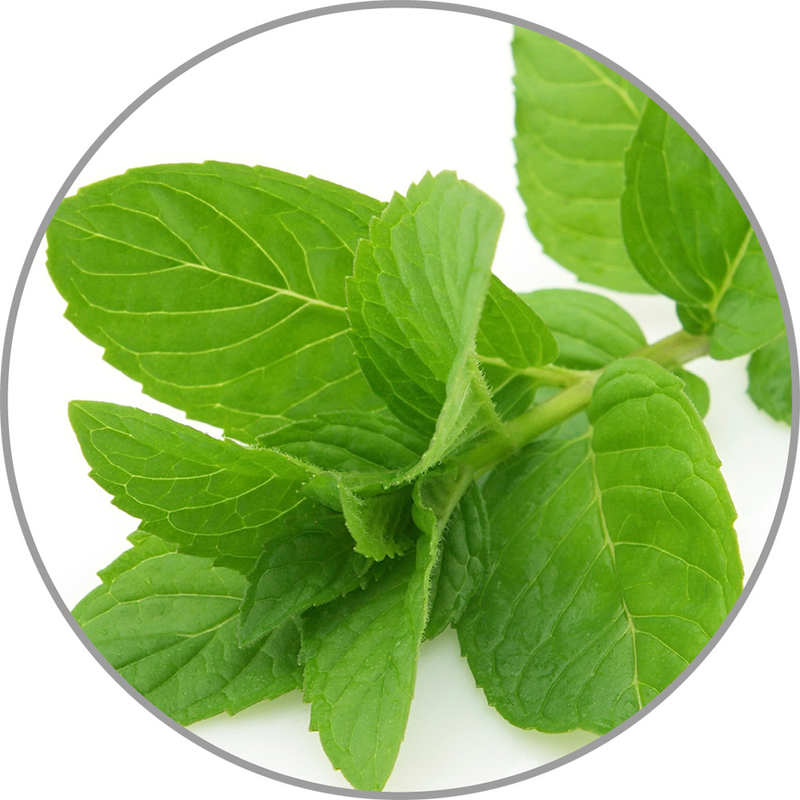 Medisana Vonná esence do aroma difuzérů - pepermint